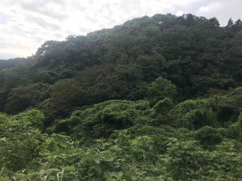 湯布院へ向かう山中