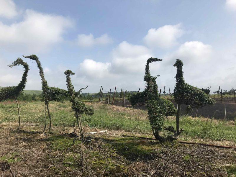 動物などの形に伐採された木々